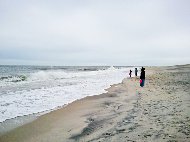 Assateague_Thxgiving_2010_05